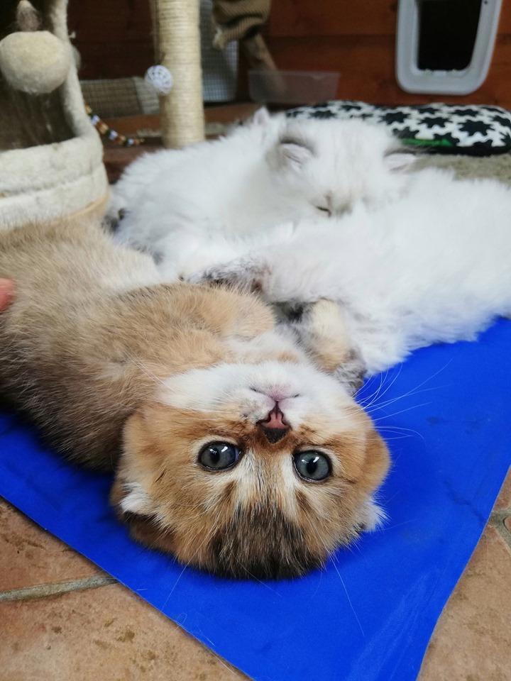 Gatti: perchè mangiano poco in estate?